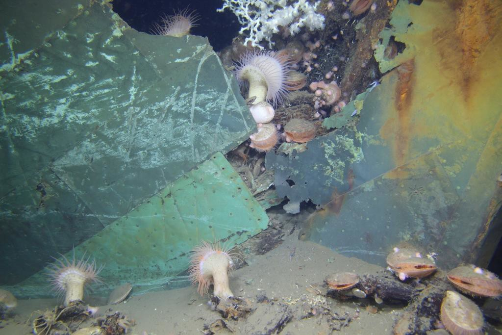 "Hull of ""Ewing Bank Wreck"", BOEM/Deep Sea Systems Int'l"